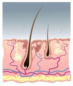 Haarwachstum nach einer Haarverpflanzung